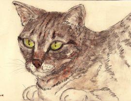 Cat portrait – s.tomsik