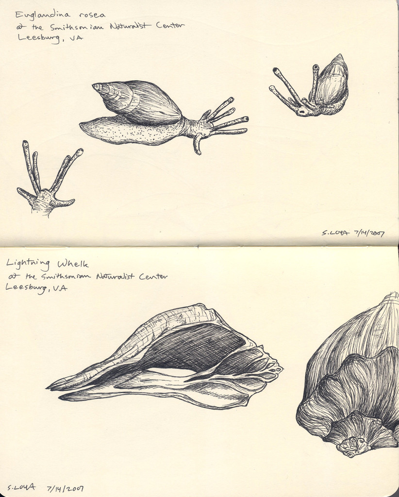snail and shell study