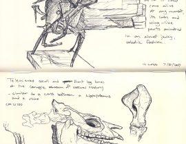 Carnegie Museum sketches