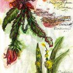 A Blood Elves Herbs