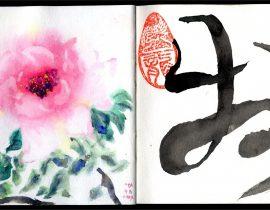 牡丹 mǔdān- Peonie