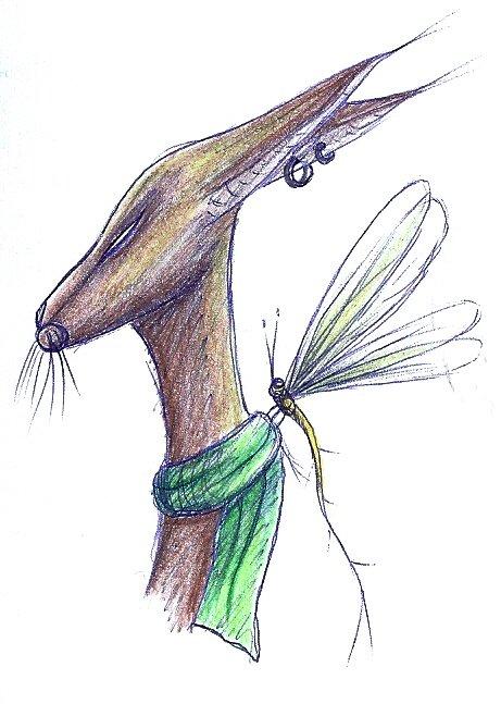Rabbit Dragonfly
