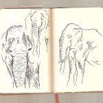 Roadtrip of California –  Elephants