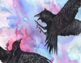 """""""crow and raven"""""""