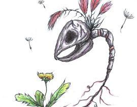 Rabbit Dandelion