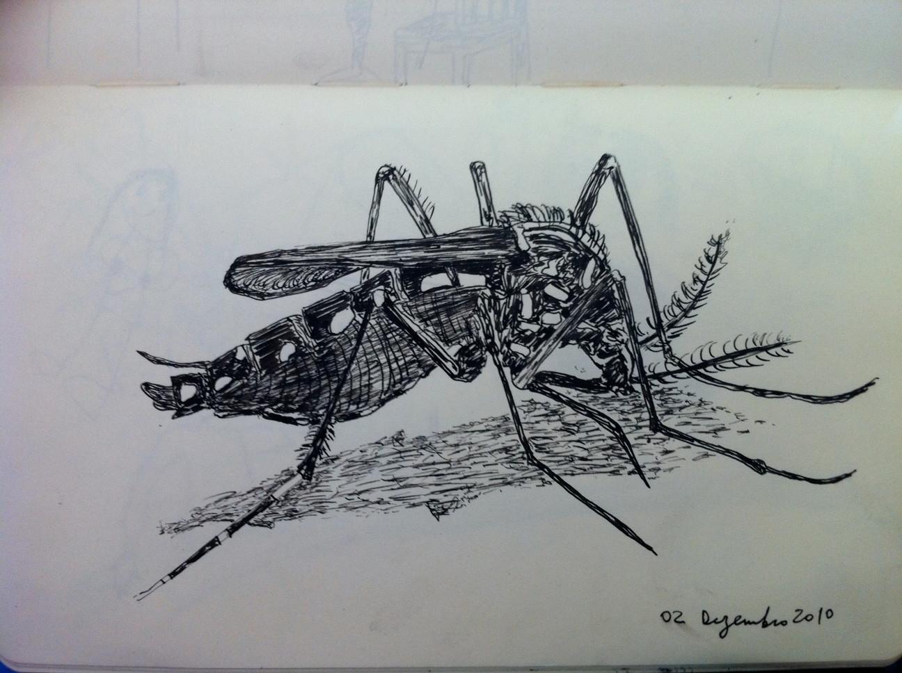 Aedes egypti