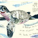 Núria's turtle