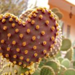 Heart of a Cactus