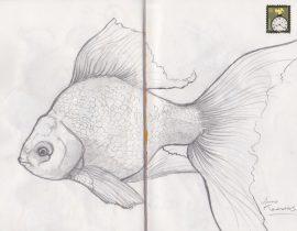 Goldfish boceto
