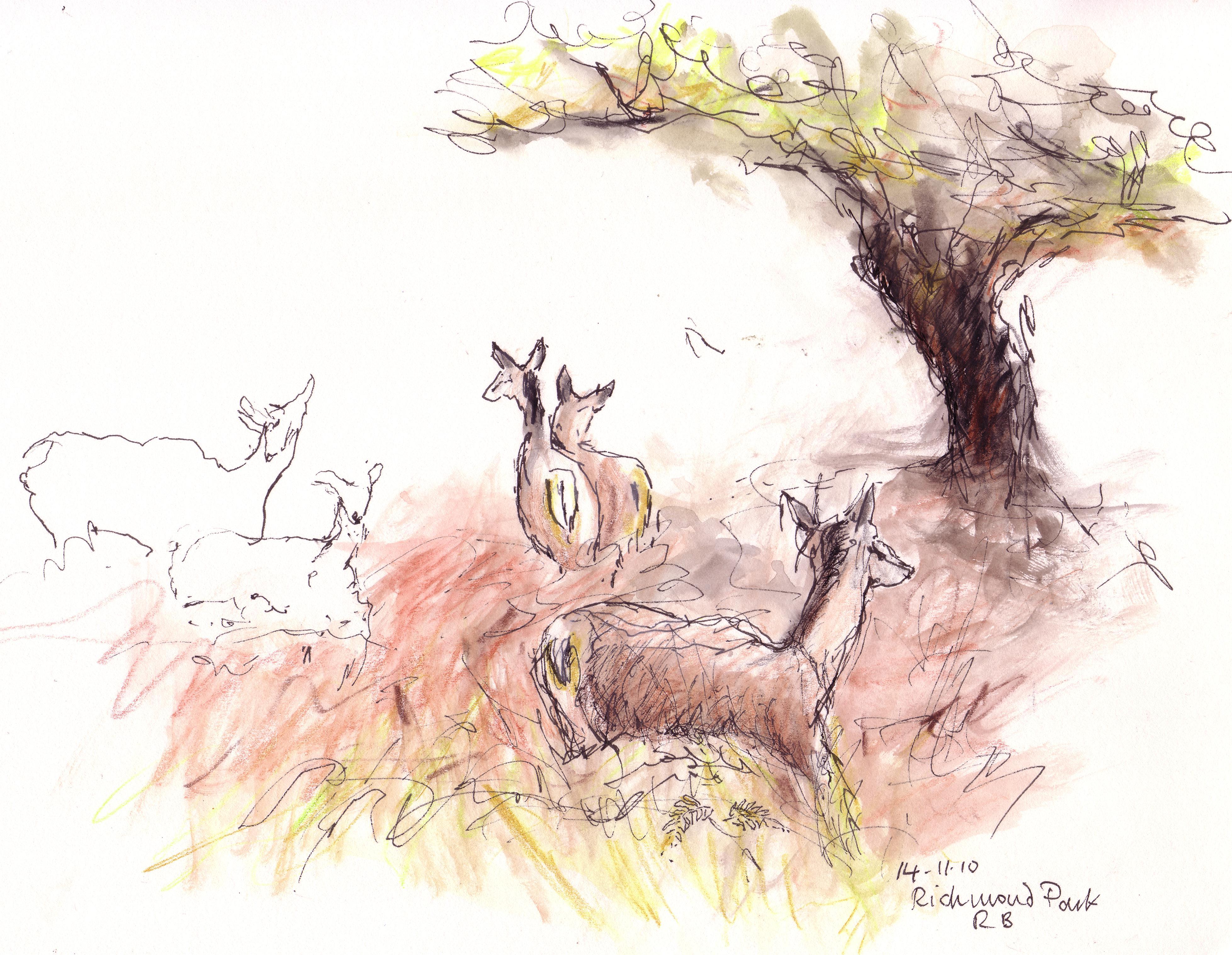 Deer in Richmond Park.