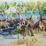 Bear Cut Mangroves
