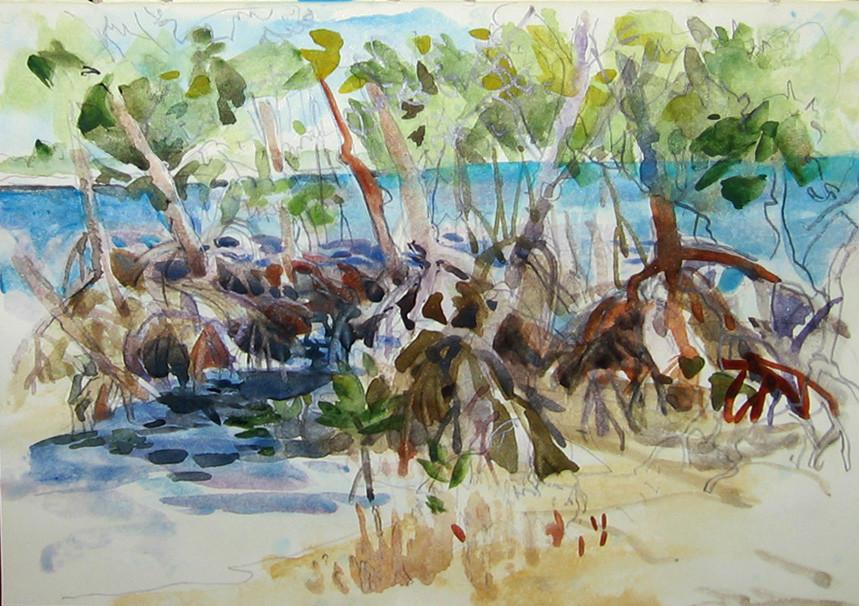 Bear Cut Mangroves