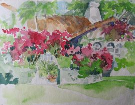 Bougainville Splendor