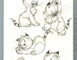Millo, the kitten.