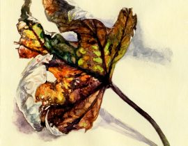 study of leaf -watercolour