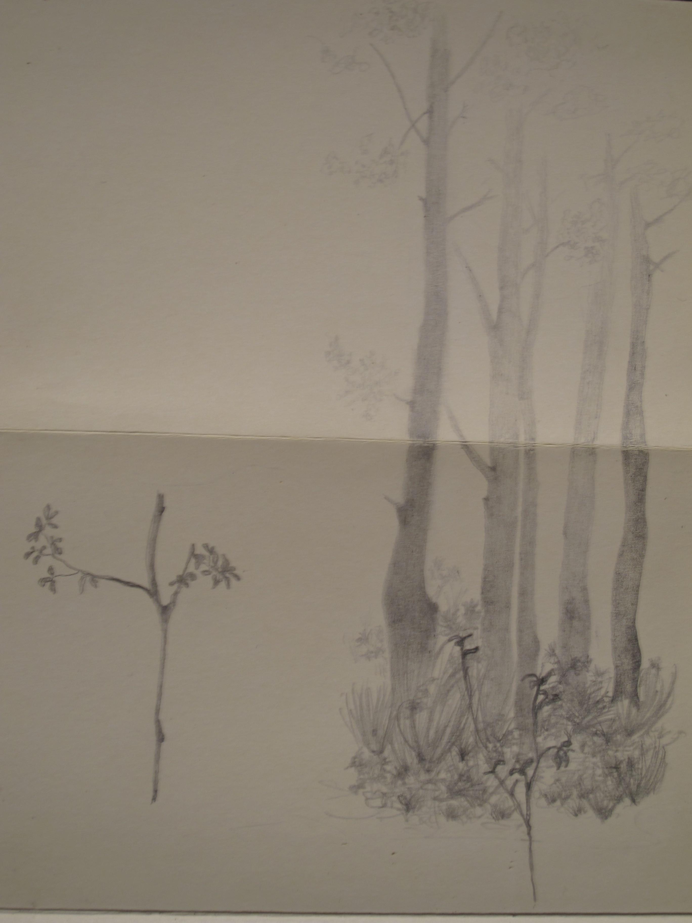Árboles en Zacatlán