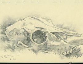 Heston's deer skull