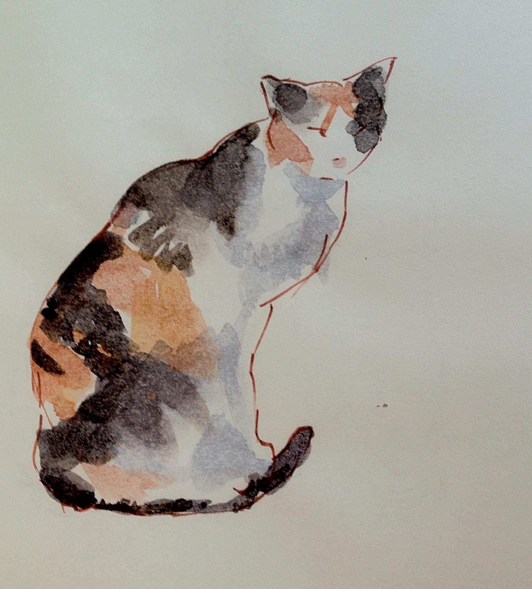 cats/Morocco
