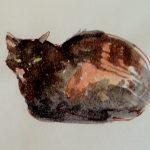 cats/ Morocco
