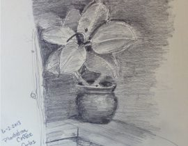 Potted Plant in Shade
