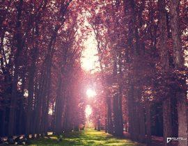 Woods in Paris