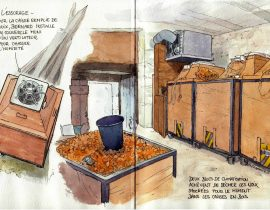 Drying nuts in the Lot in various sketches