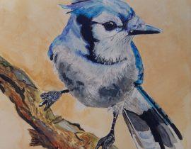 Bluejay on branch