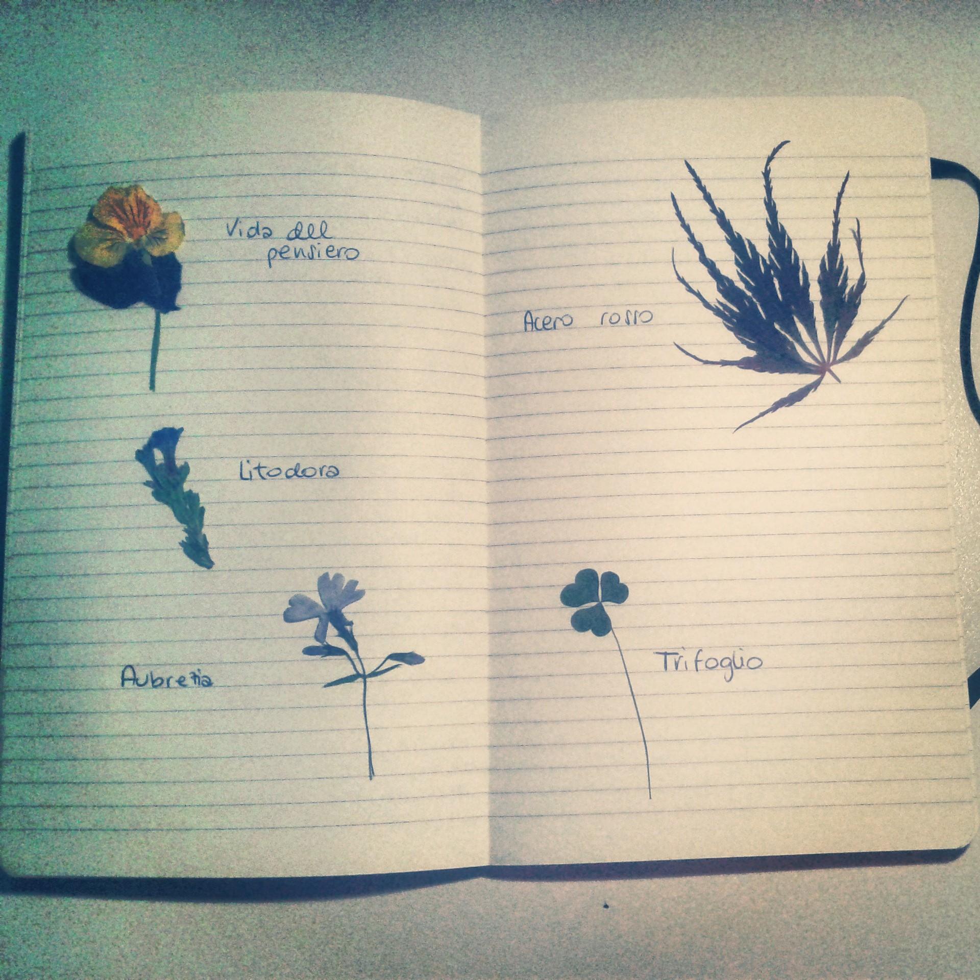 Garden in my diary.