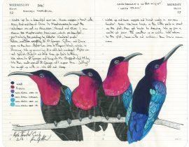 A Myriad of Birds . Purple Throated Carib