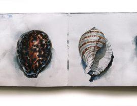 Three Seashells