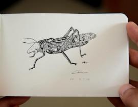 nose bug