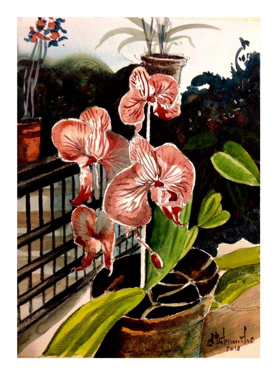 Orquídeas Veracruzanas