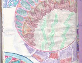 mandala doodles