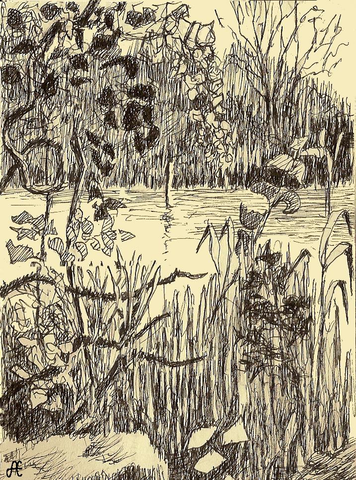 Swamp at Manresa
