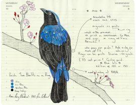 All My Beautiful Boys . Asian Fairy Bluebird