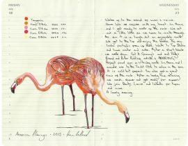 All My Beautiful Boys . Flamingos