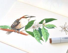 Birds of El Salvador