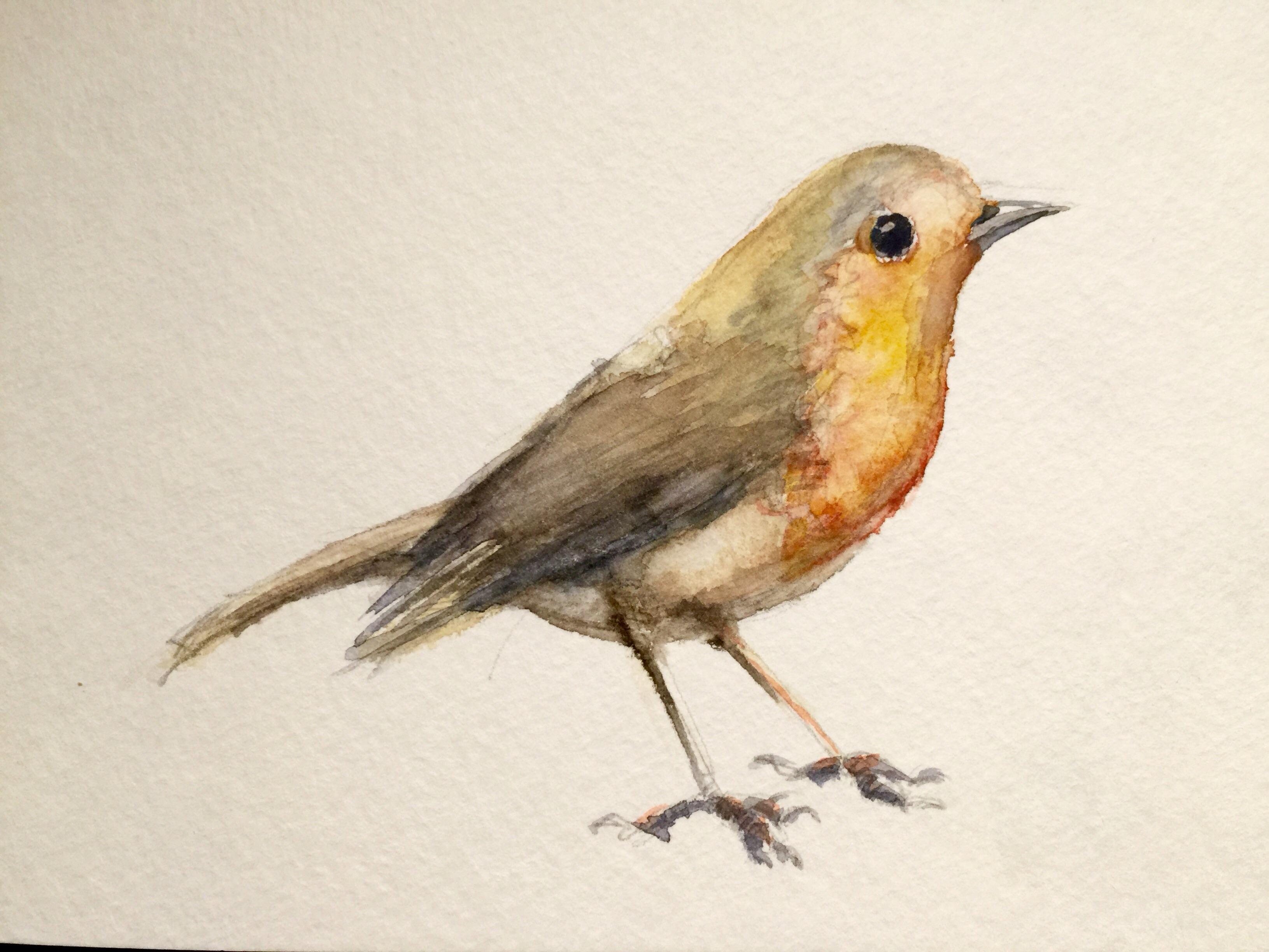 A Bird in watercolor