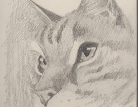 yes…a cat drawing