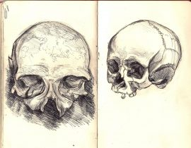 skull study 1