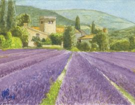 Lavender Field, South of France