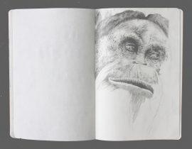Orangutan portrait