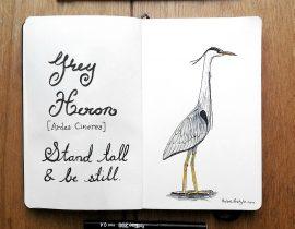 Harriet the Grey Heron