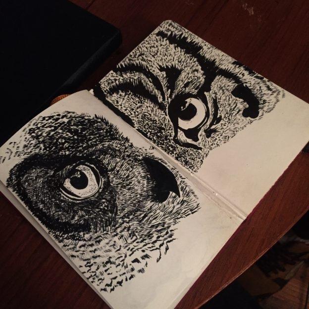 Owl observation in small sketchbook