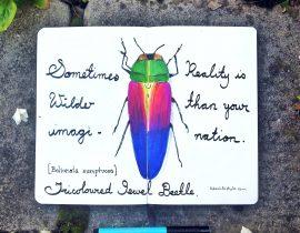 Tricoloured jewel beetle.