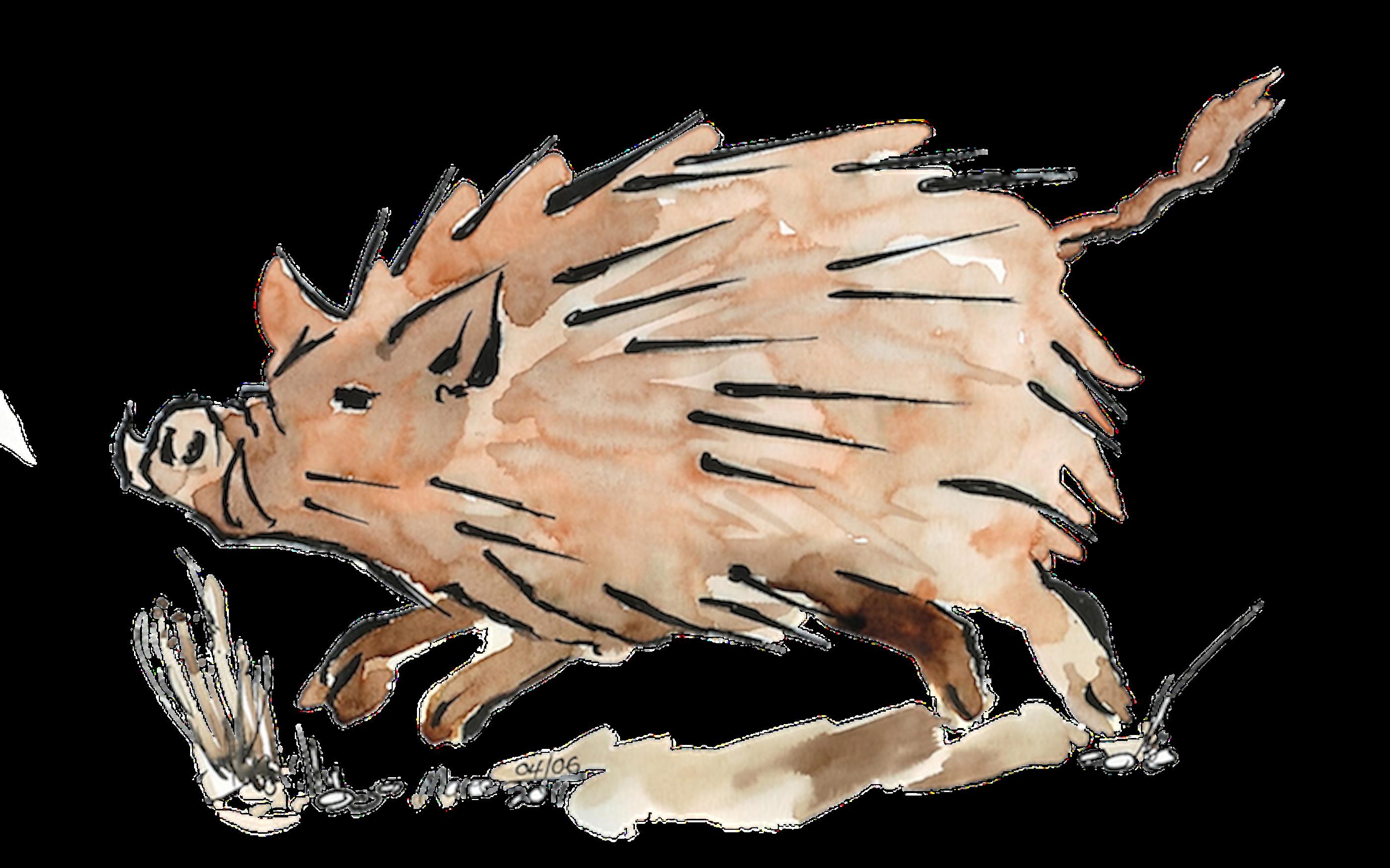 Warthog sketch in Moleskine Folio 200gsm