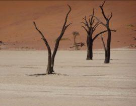 Namib Desert – Dead Vlei