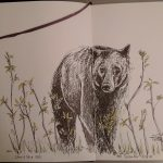 Black Bear 002