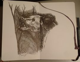 Black Bear 003