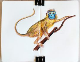Monkey. Crayons only